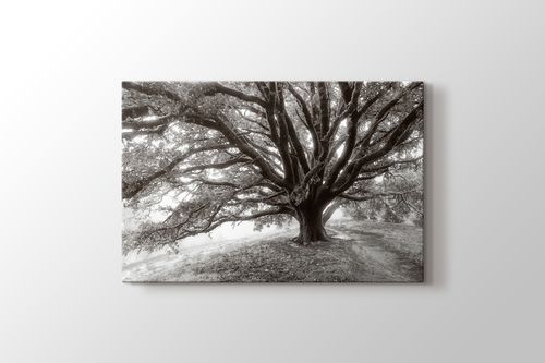 Picture of Huge Tree