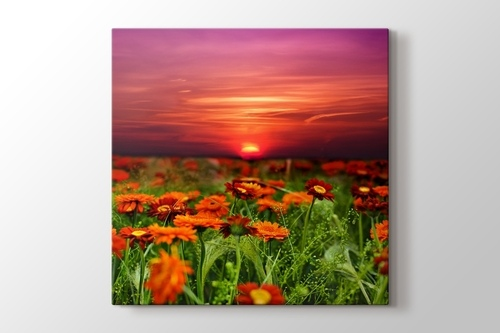 Picture of Sunset and Flower