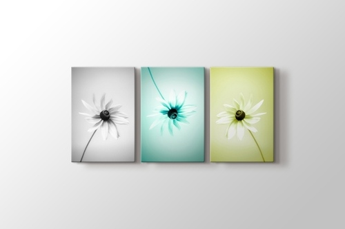 Picture of Three Daisy