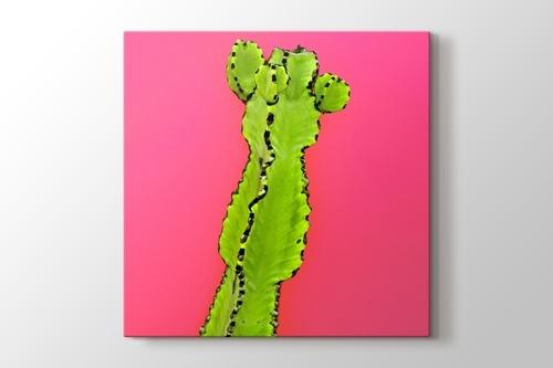Picture of Cactus