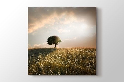 Picture of Loner Tree