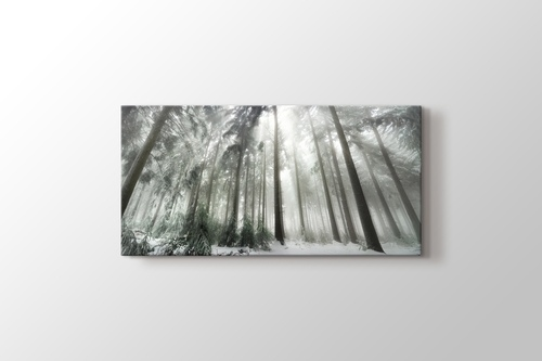 Picture of Winter Forest