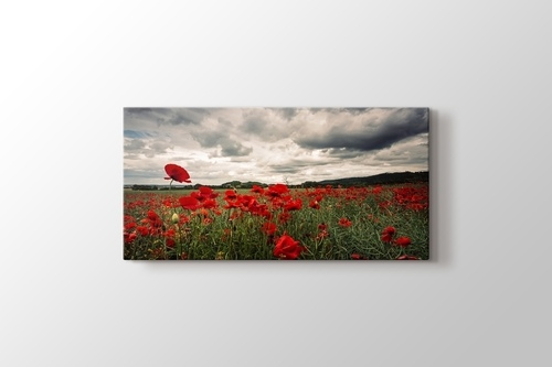 Picture of Poppy Field