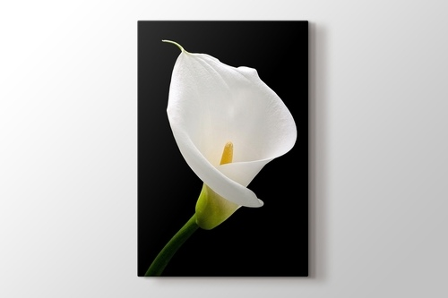 Picture of White Lillies
