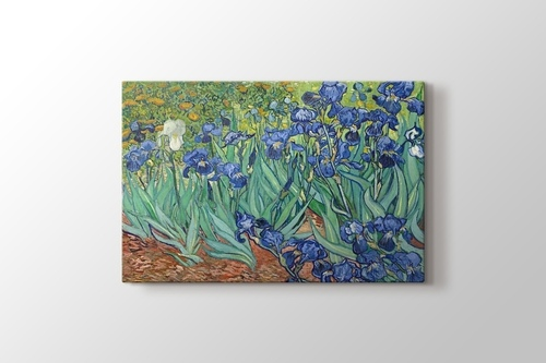 Picture of Irises