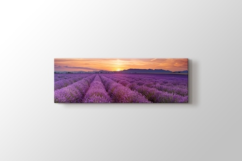 Picture of Lavender Field Panorama