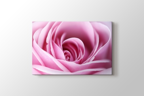 Picture of CloseUp Pink Rose