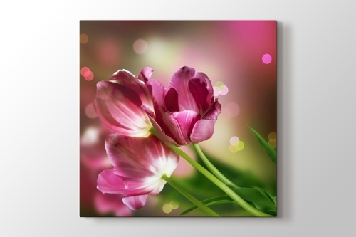 Picture of Pink Tulips
