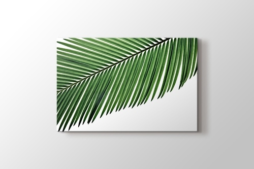 Picture of Palm Leaf