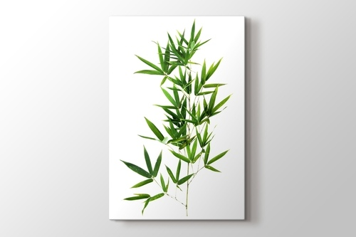 Picture of Bamboo Leaves