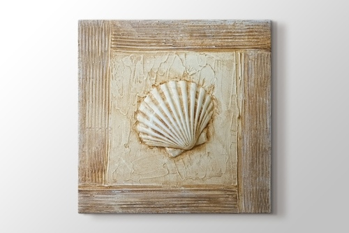 Picture of Seashell