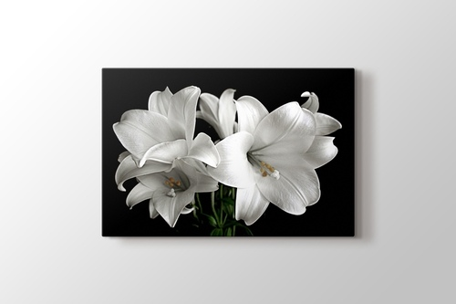 Picture of White Flower